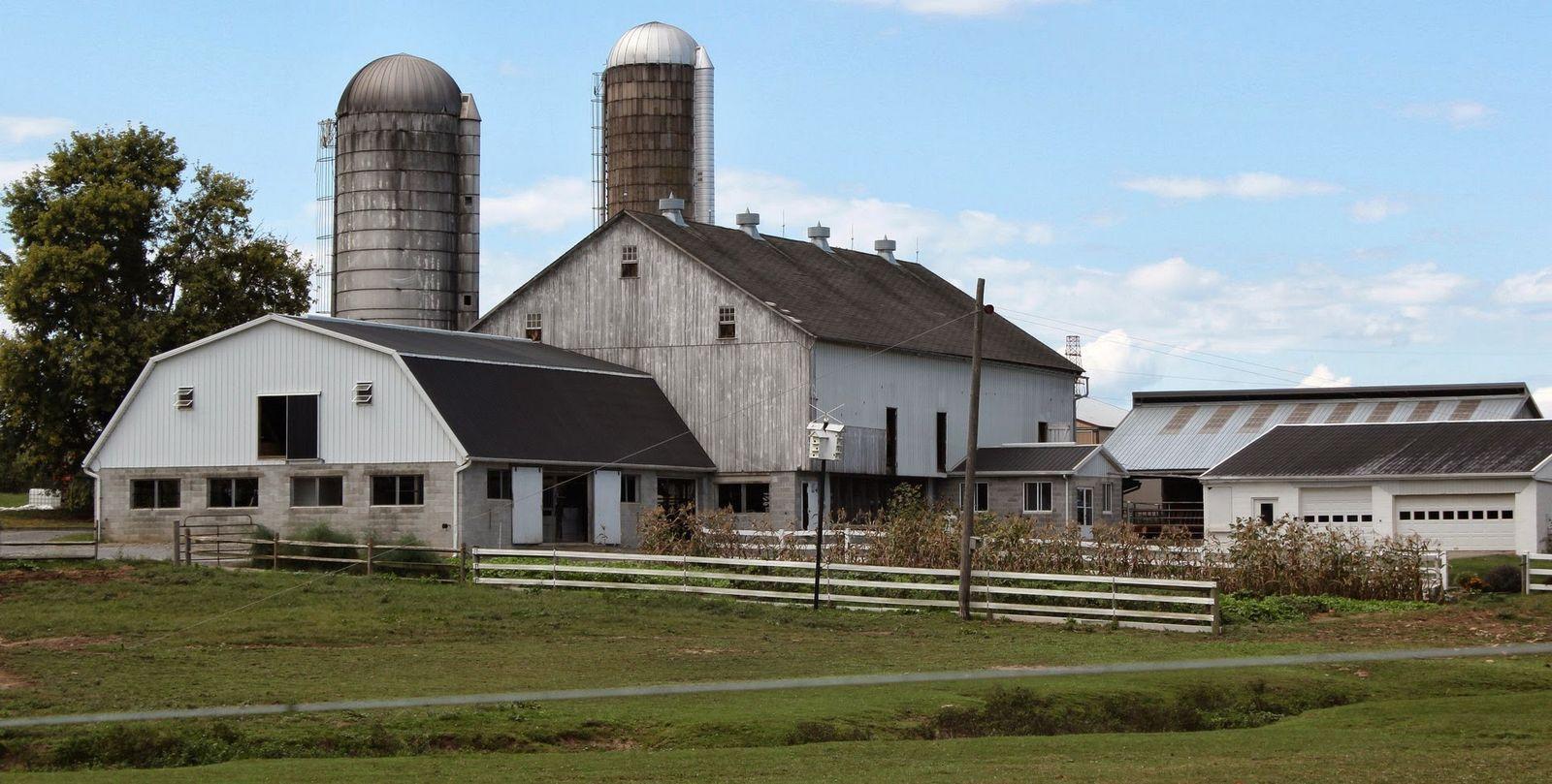 Granjas y más granjas, a cada cual más descomunal