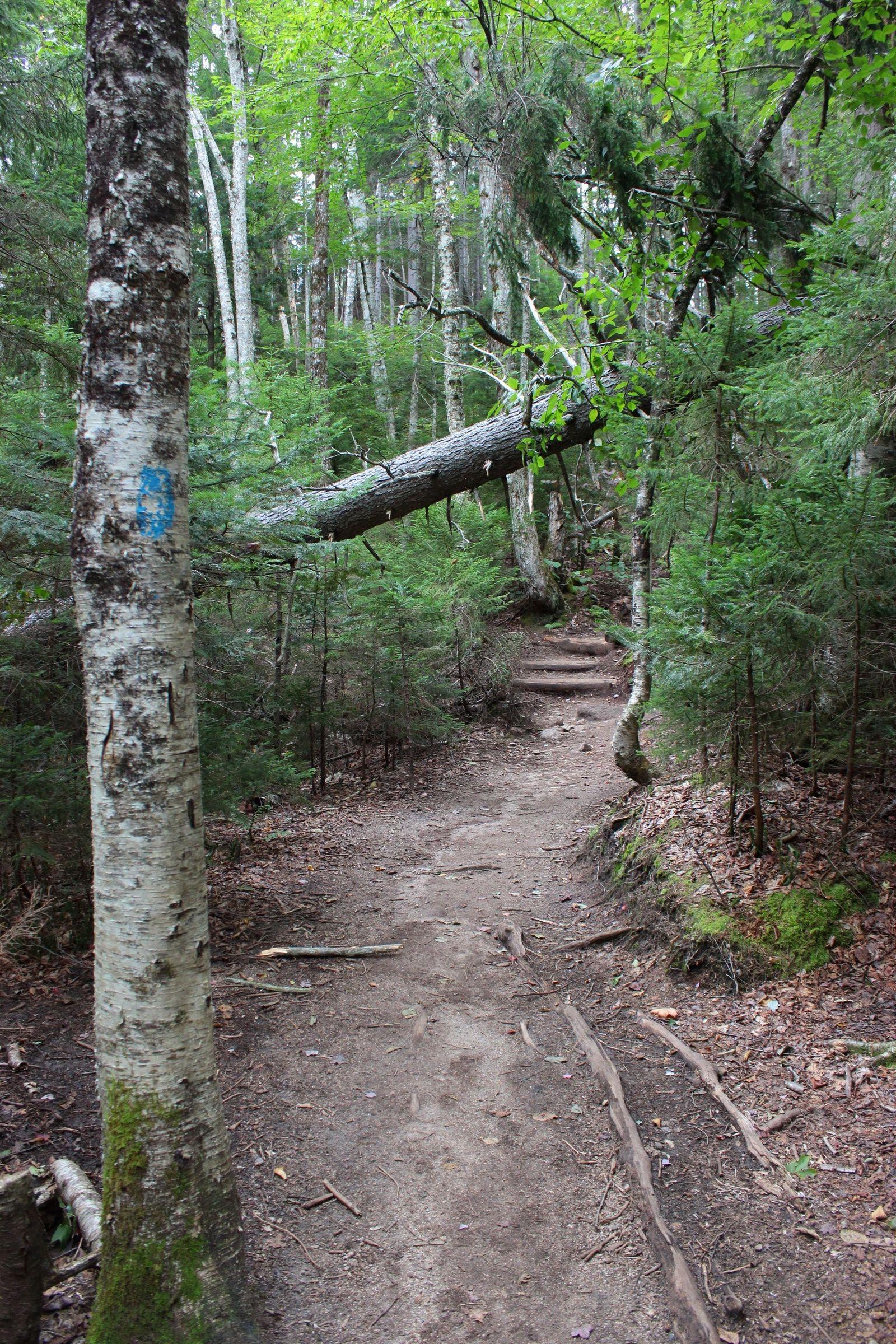 ... hitos azules en los árboles y rocas...
