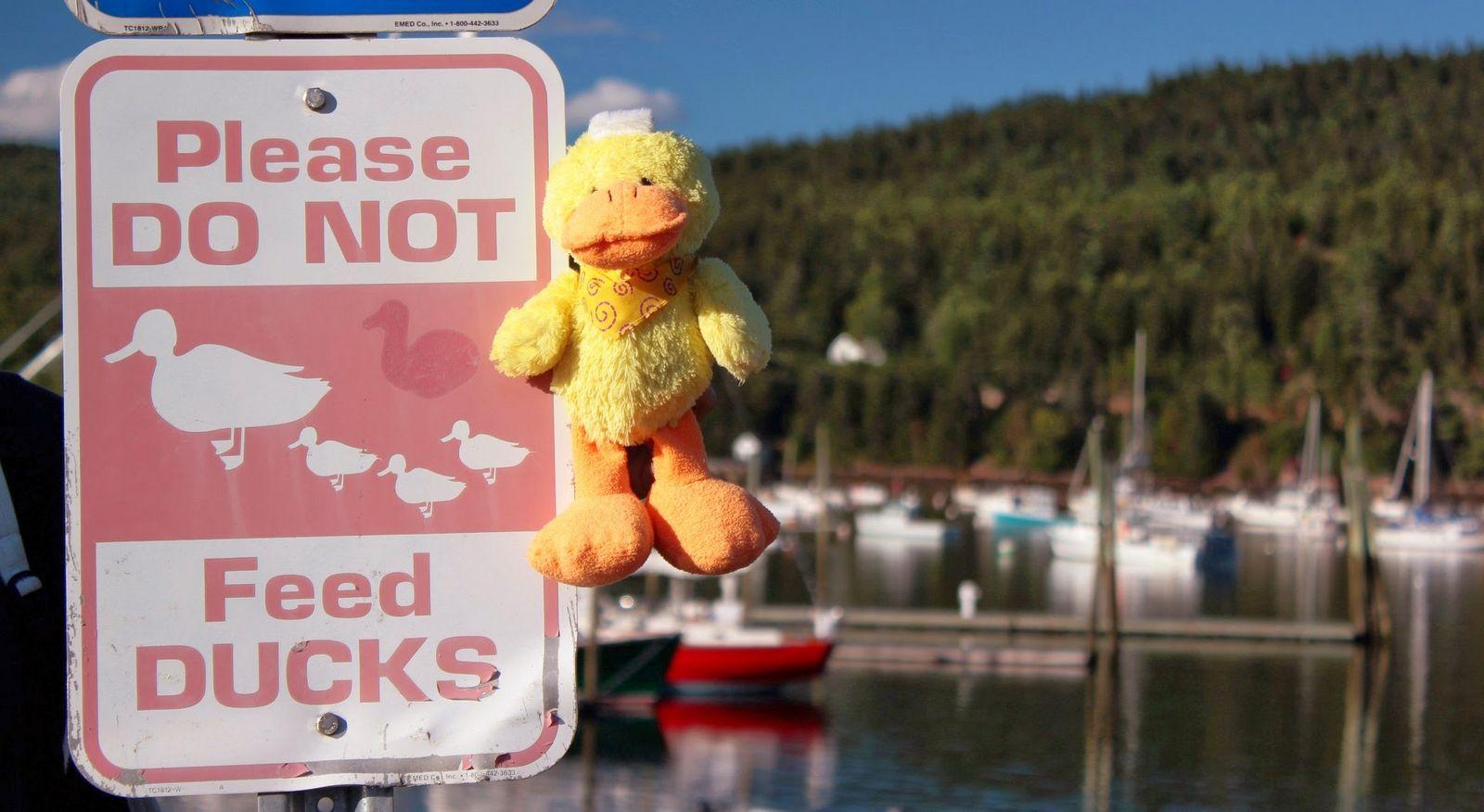 No den de comer a los patos... ¿a ninguno?