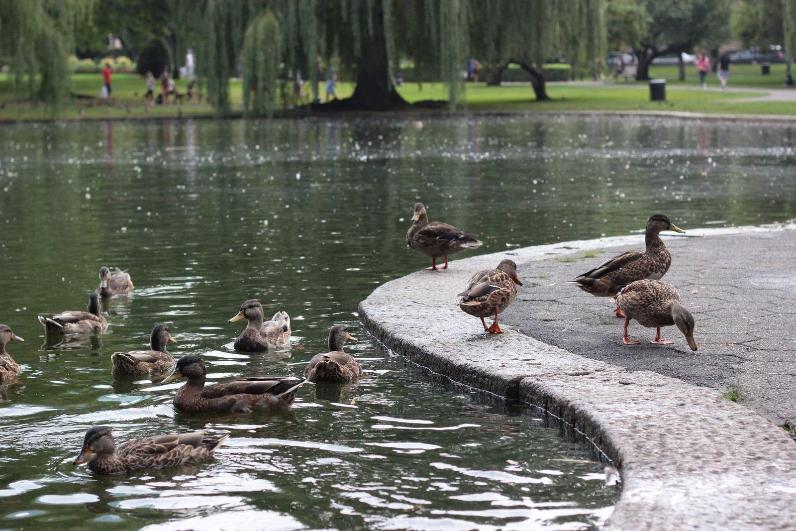 Los amos y señores del Boston Public Garden