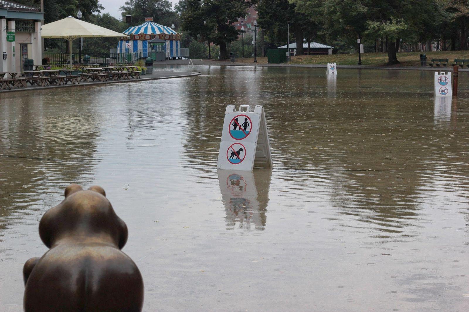 El Frog Pond, testigo de la lluvia
