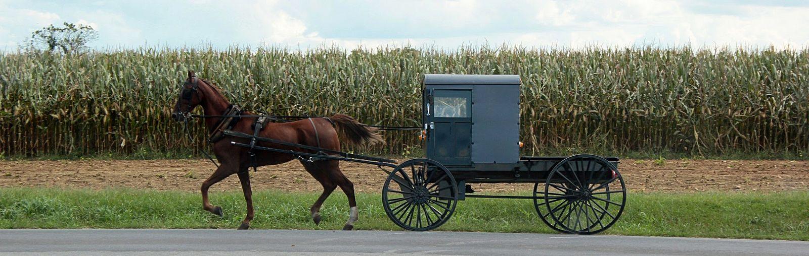 Yo diría que ese buggy se conduce solo...