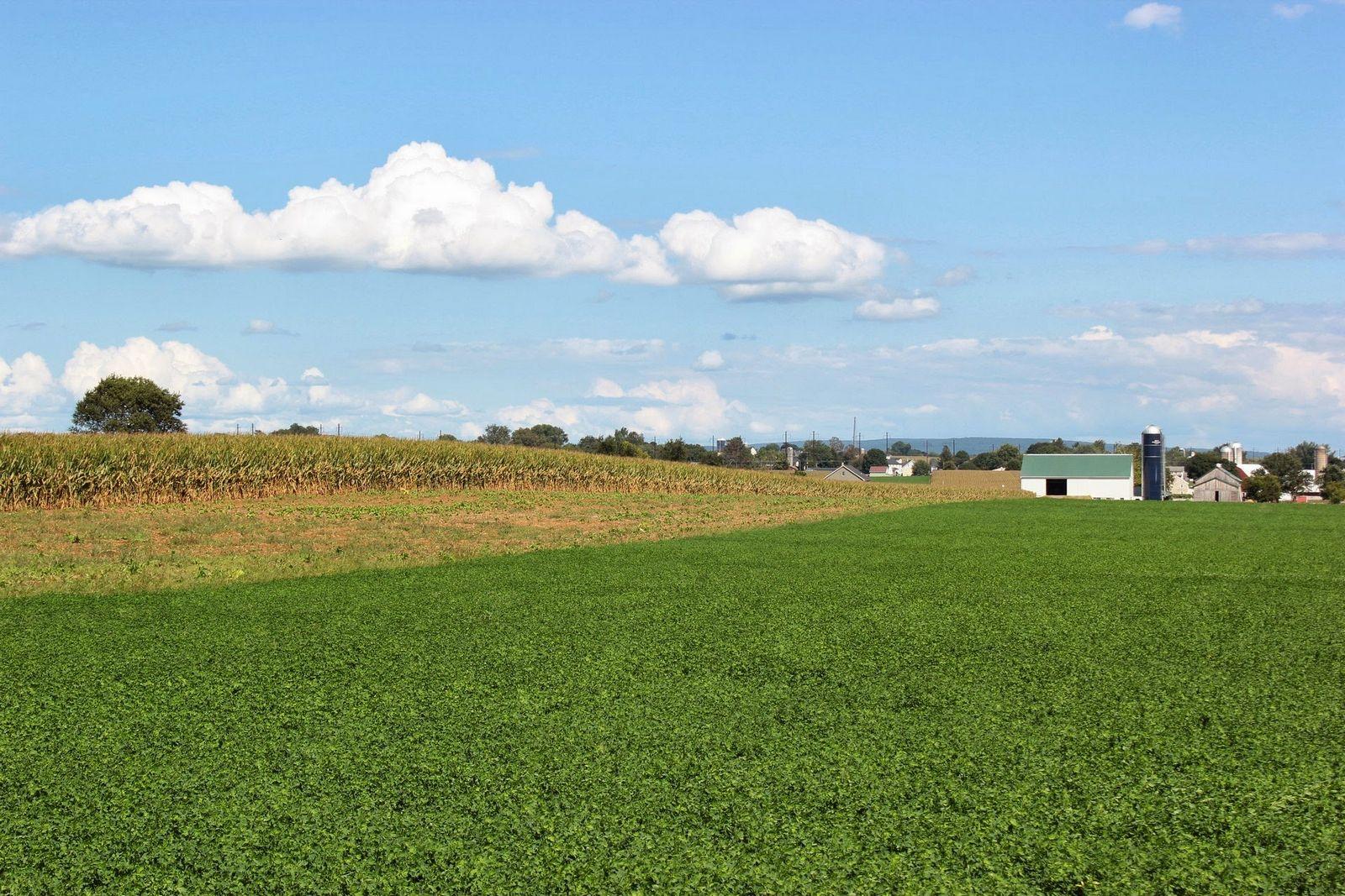 Enormes campos de maíz mires hacia donde mires
