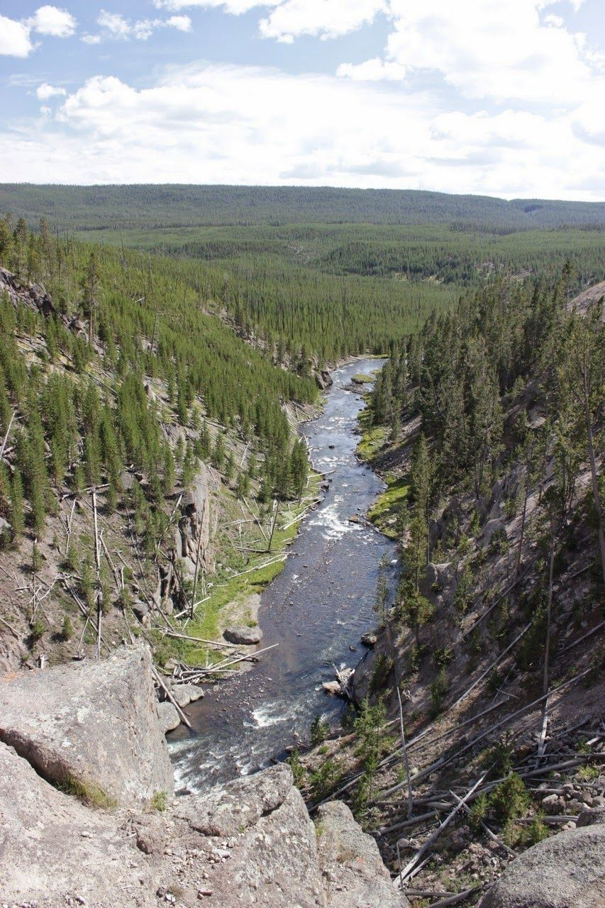 Aquí el Gibbon River sigue hacia el este entre la vegetación