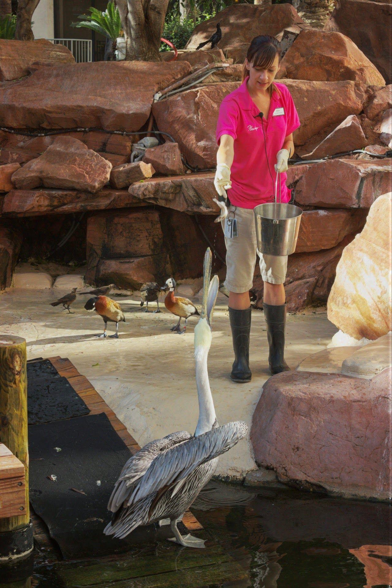 Inconcebible que el pelicano desayune antes que nosotros