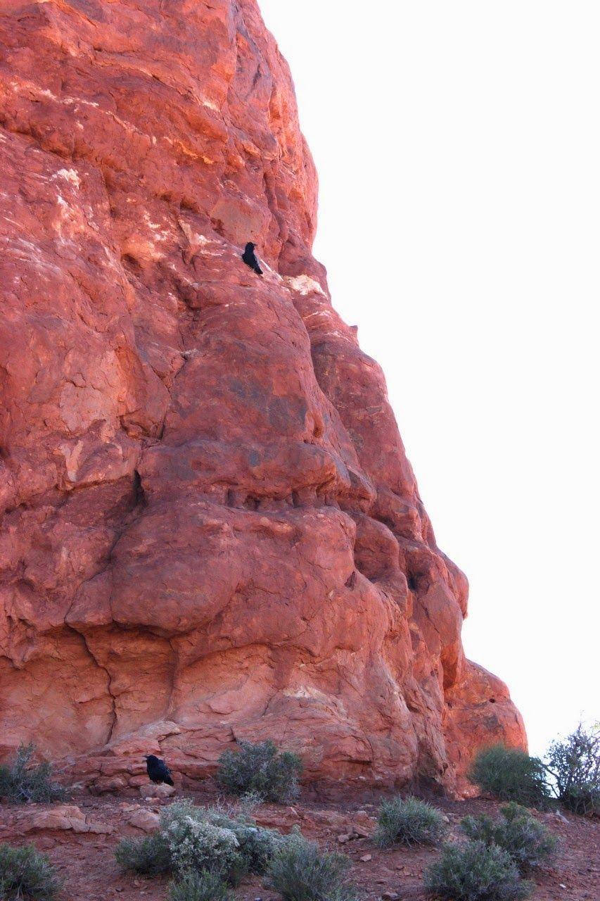 Los guardianes de la roca