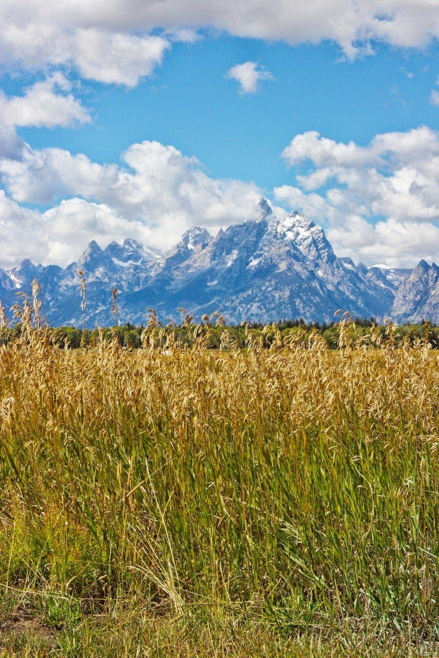 Campos de trigo vigilados por el Monte Owen