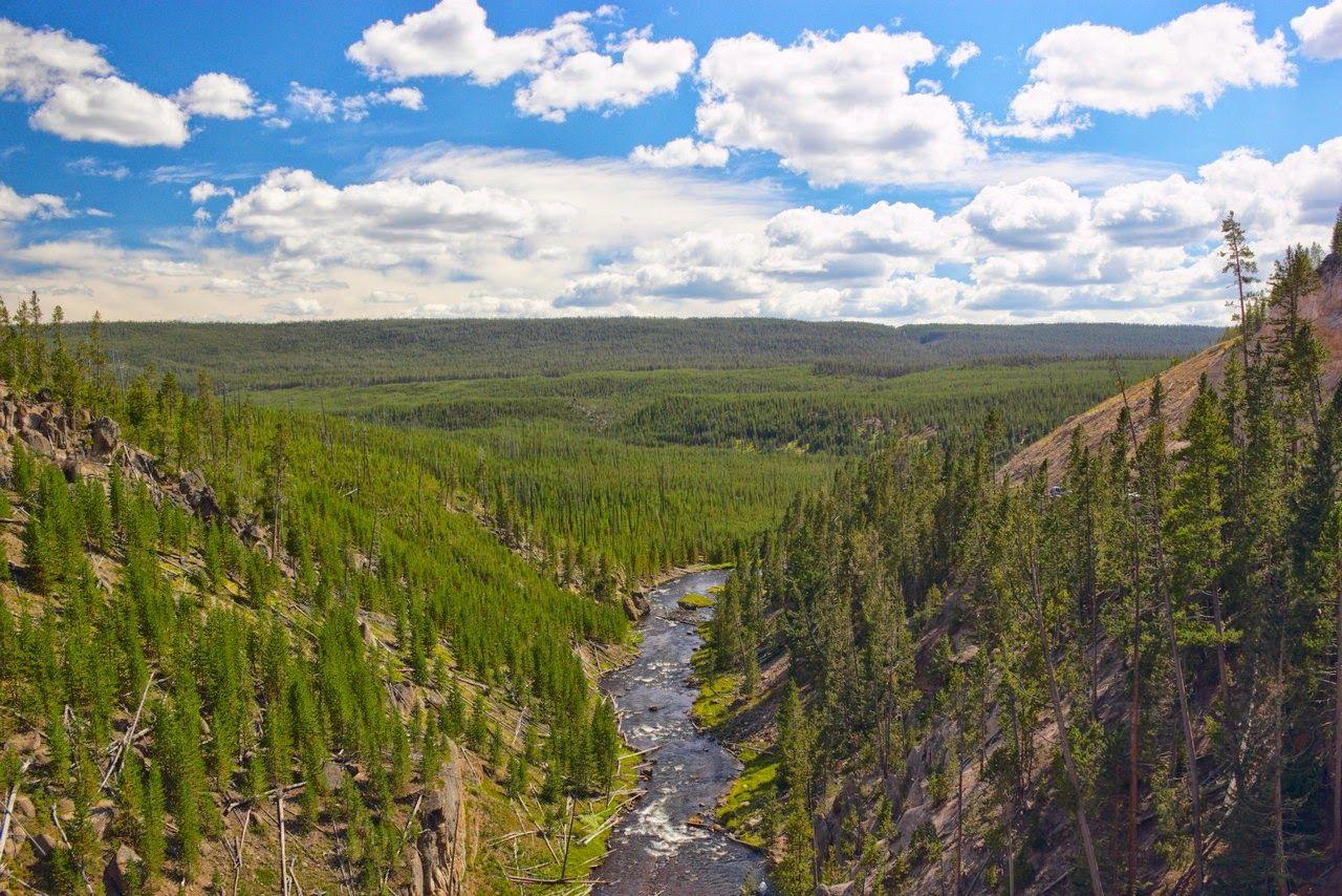 Los verdes de Yellowstone se pierden en el horizonte