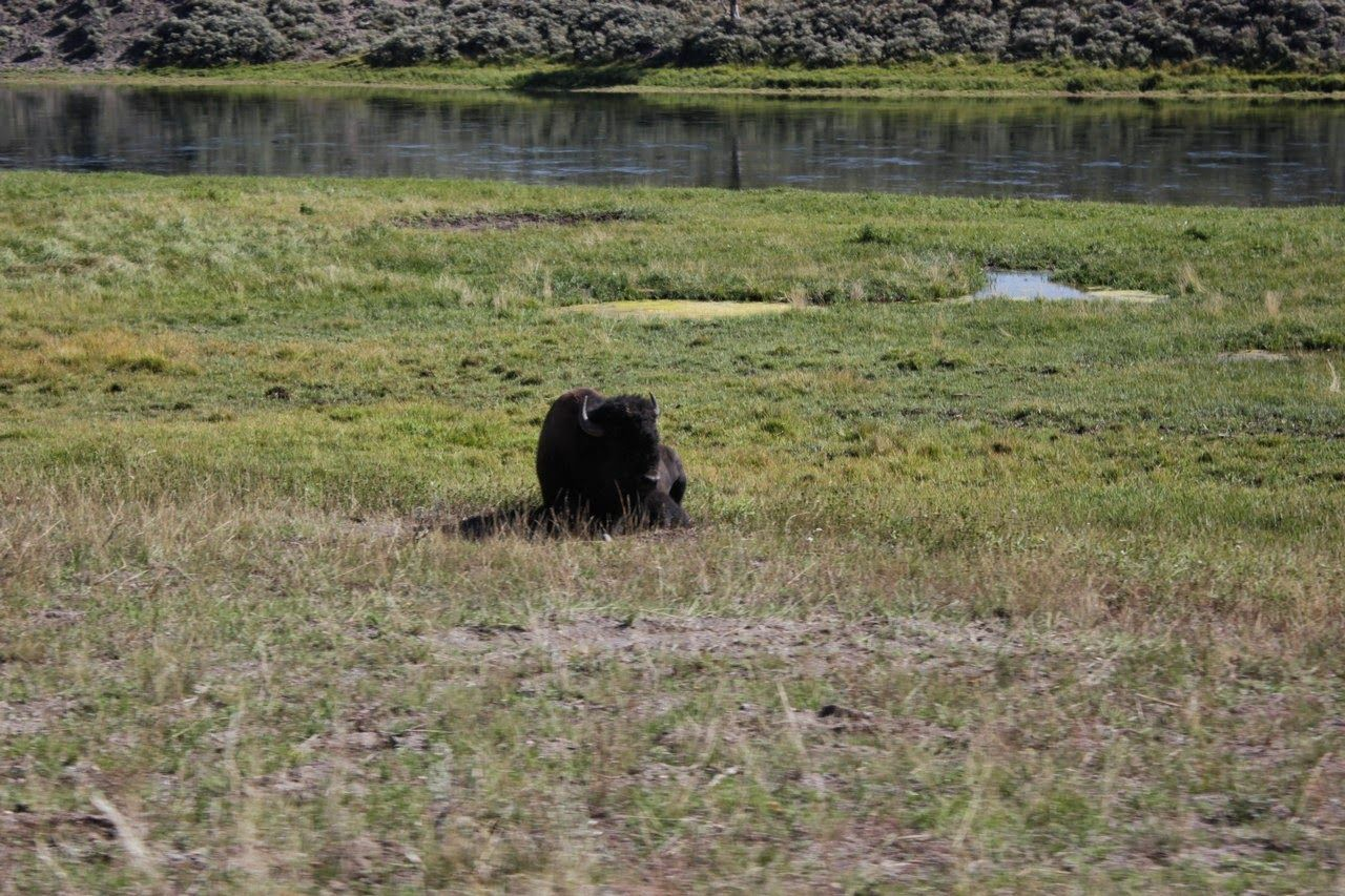 Solo algún búfalo despistado alejado de la manada