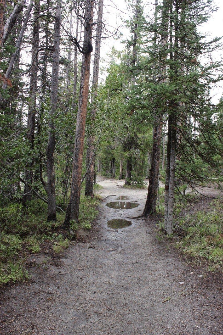 Primeros metros del sendero entre String y Leigh Lake