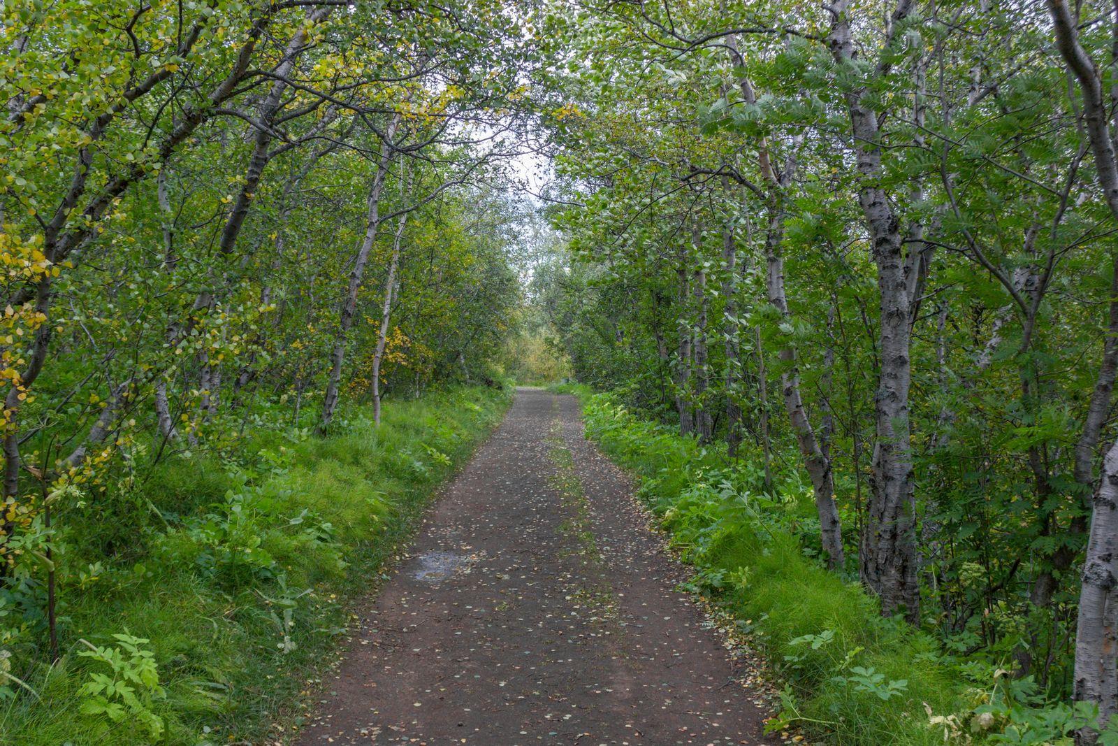 El laberinto verde de Höfdi
