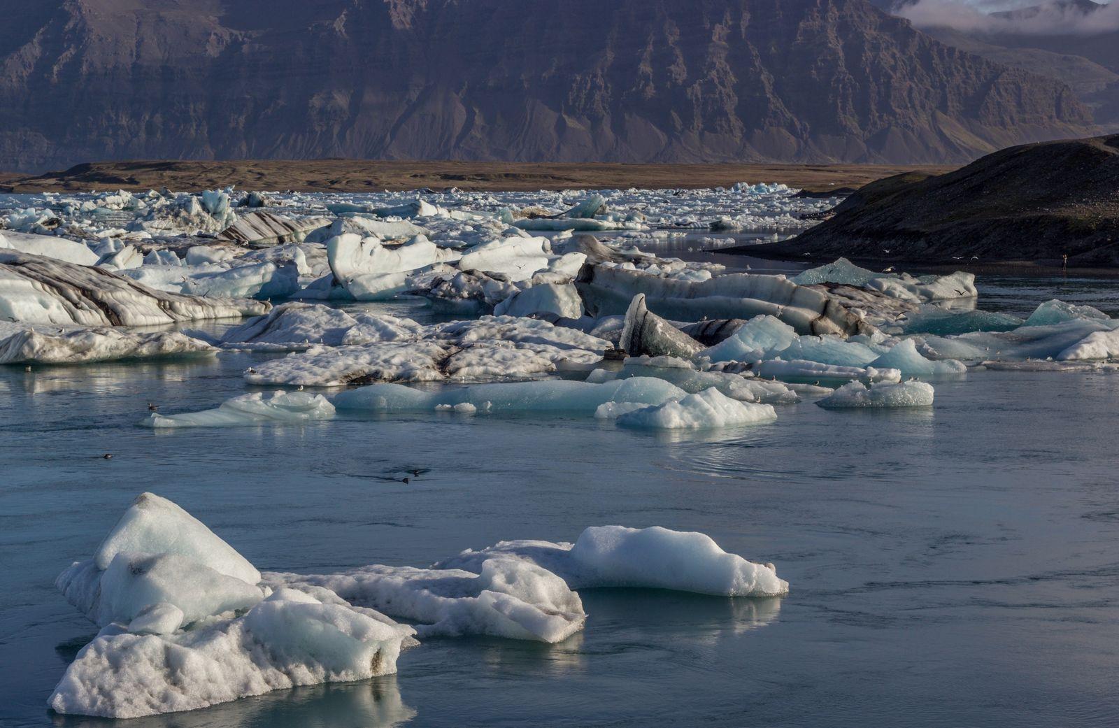 Gaviotas y focas campando a sus anchas