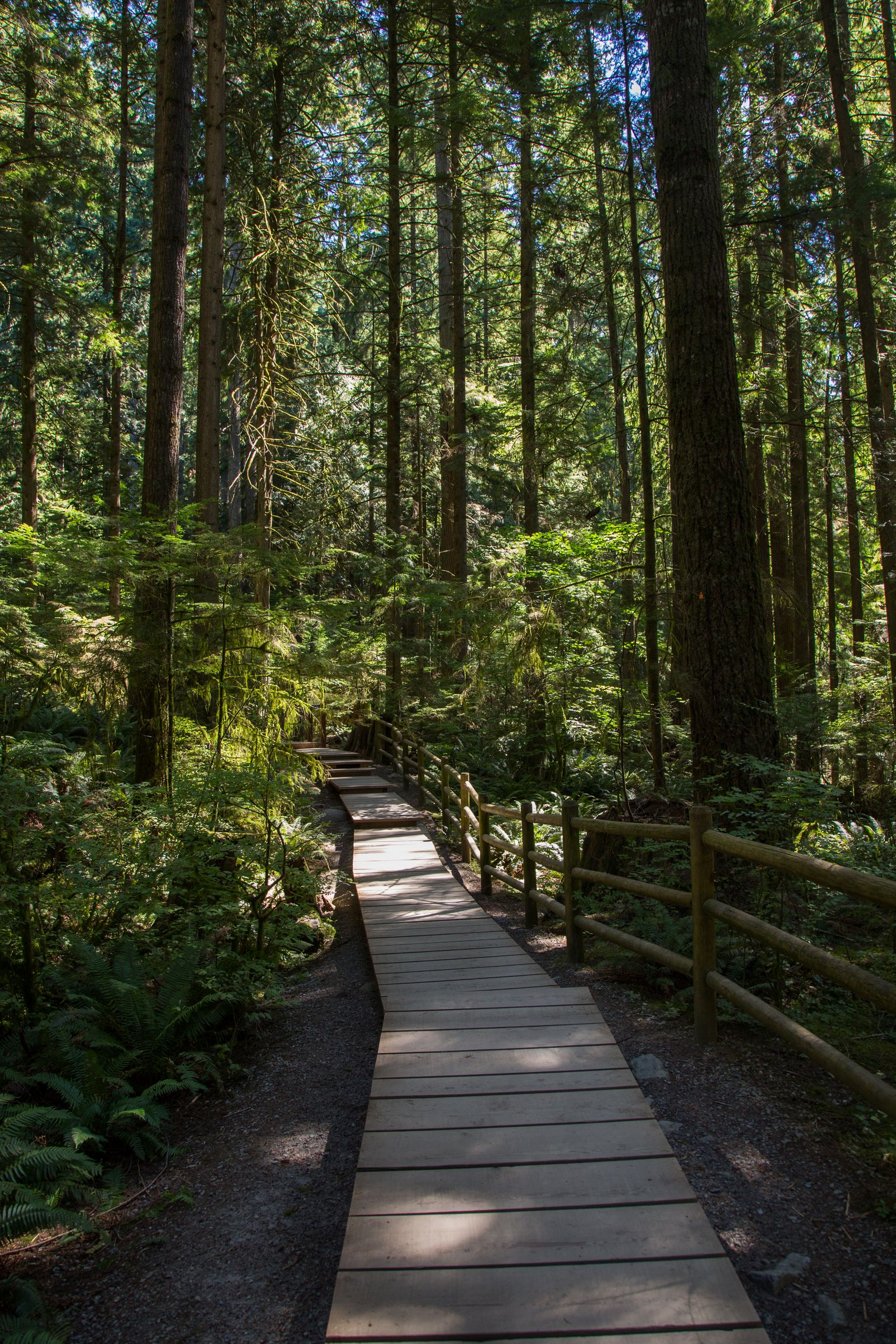 Los bosques de Lynn Canyon