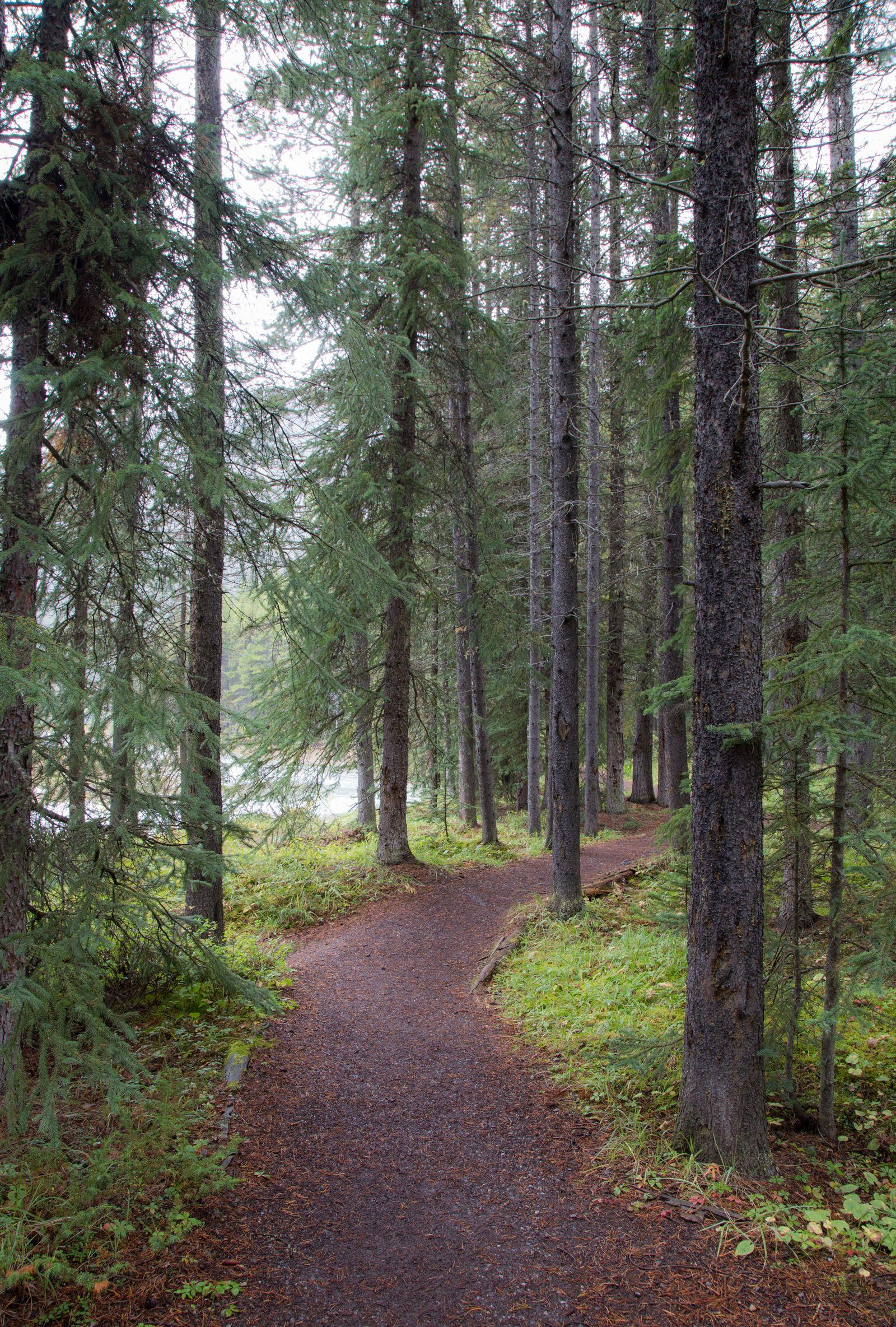 Caminando hacia el Lower Waterfowl Lake...