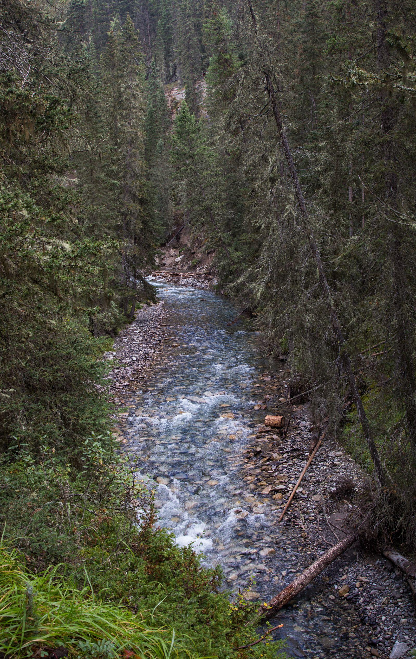 Primeros pasos junto al Bow River