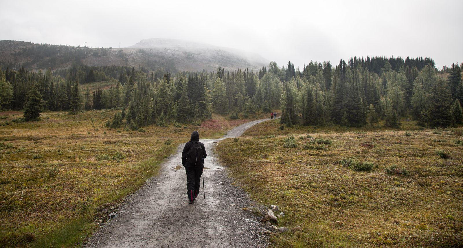Caminando bajo la niebla