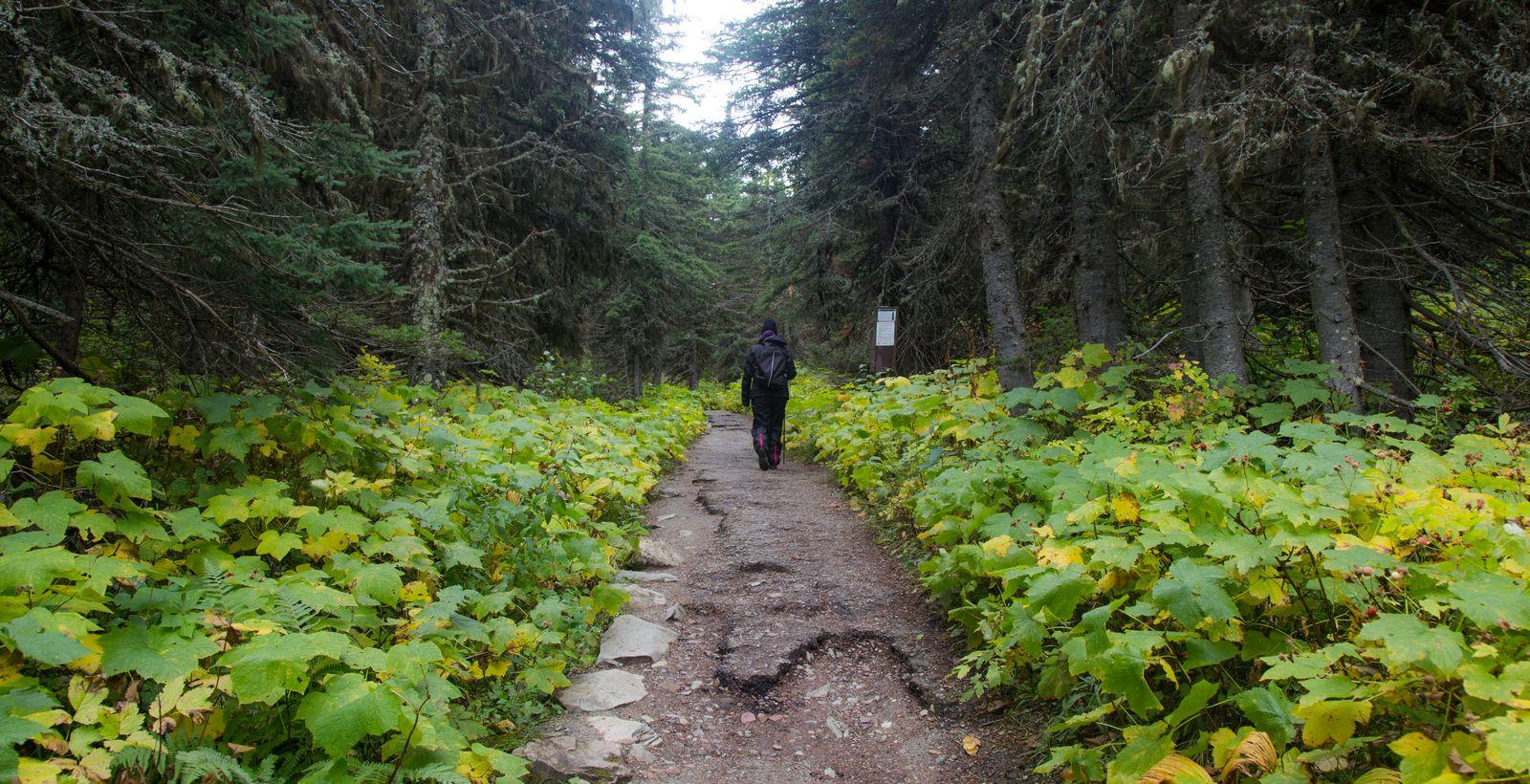 Primeros kilómetros llanos y rodeados de vegetación