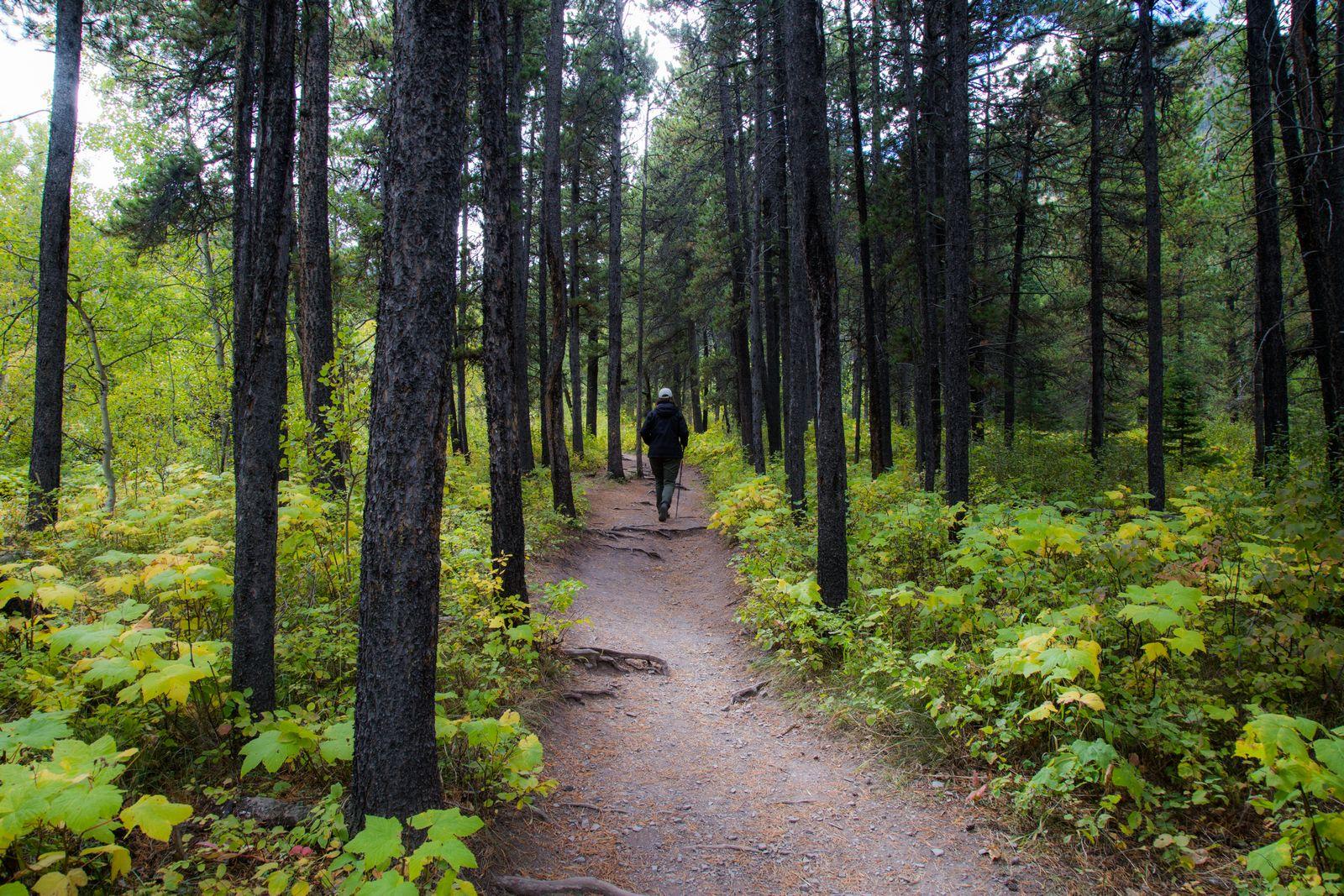 El camino a Crandell Lake