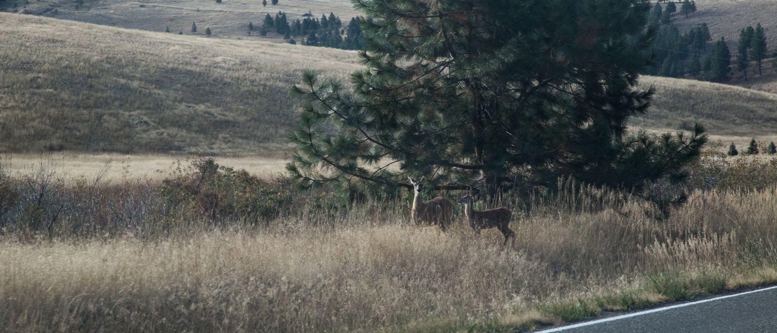 Unos ciervos que decidieron obligarnos a aminorar