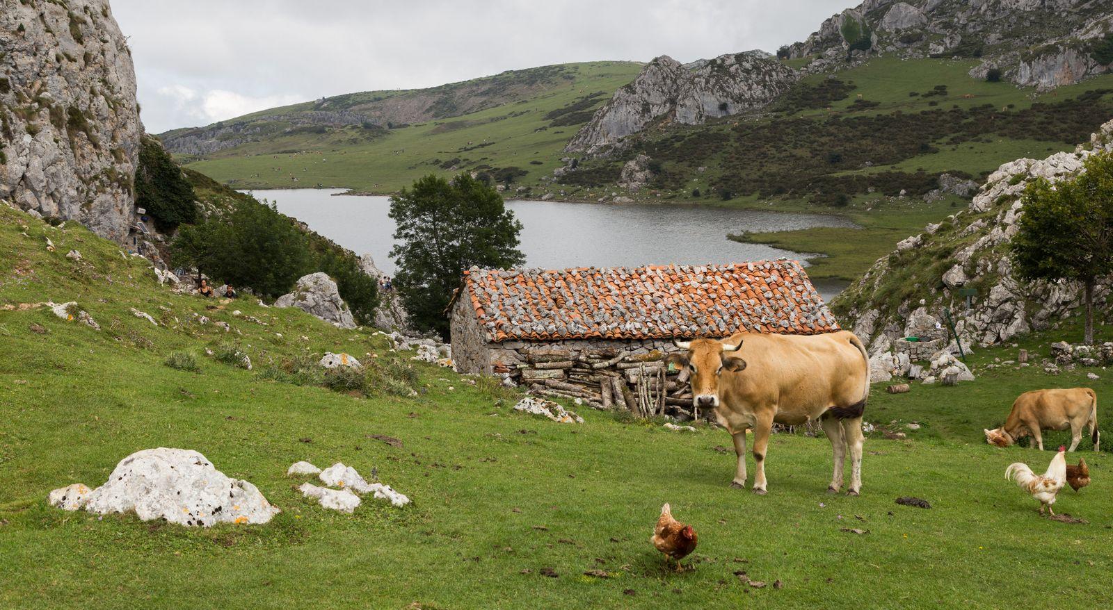 Refugios, vacas... el paisaje no cambia