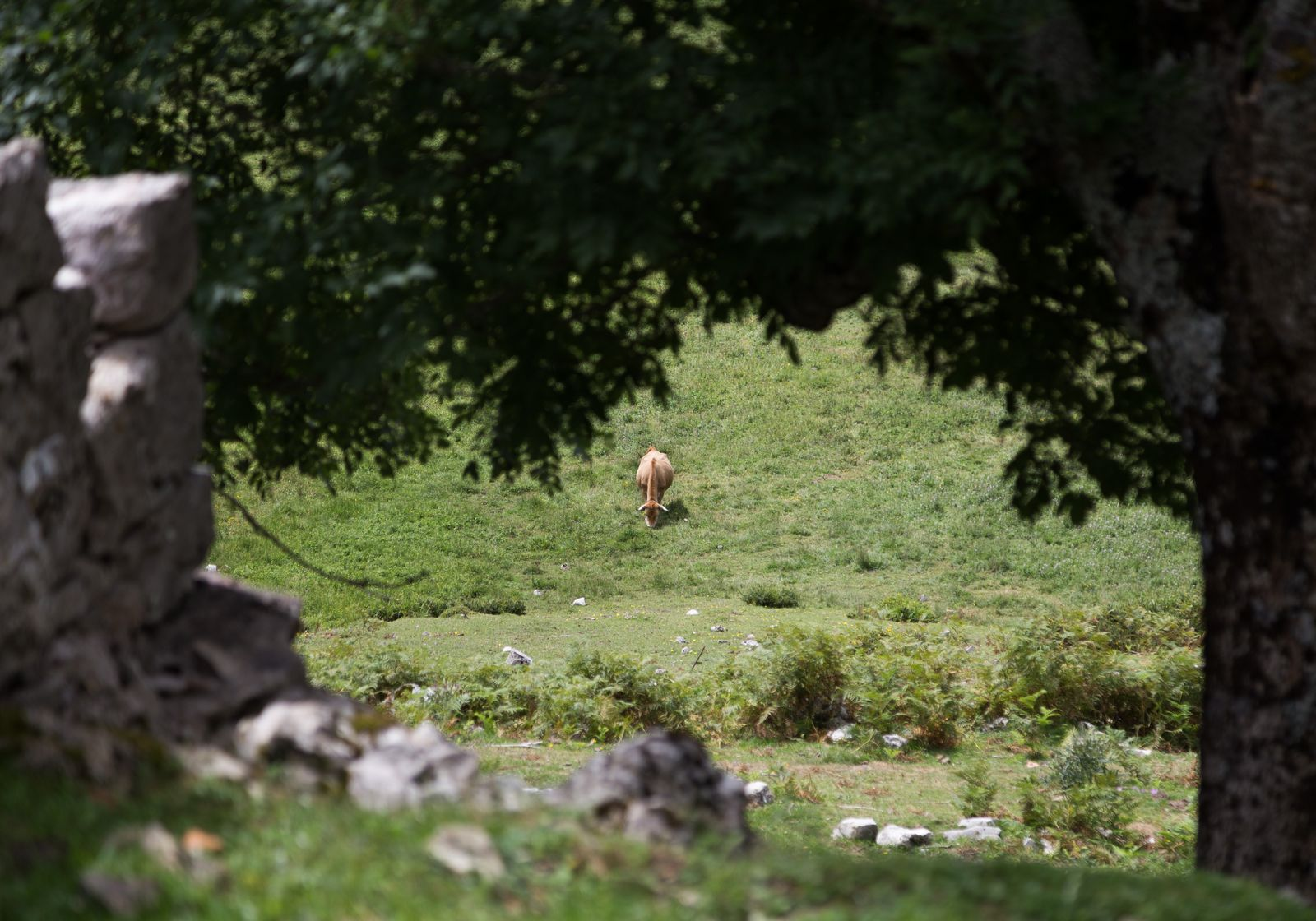 Vacas de cerca y vacas de lejos