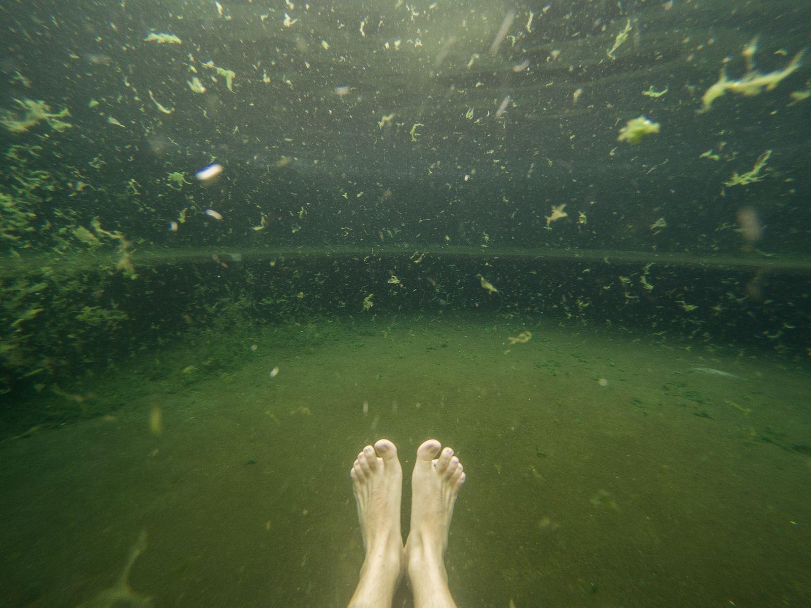 Levantando algas al pasar