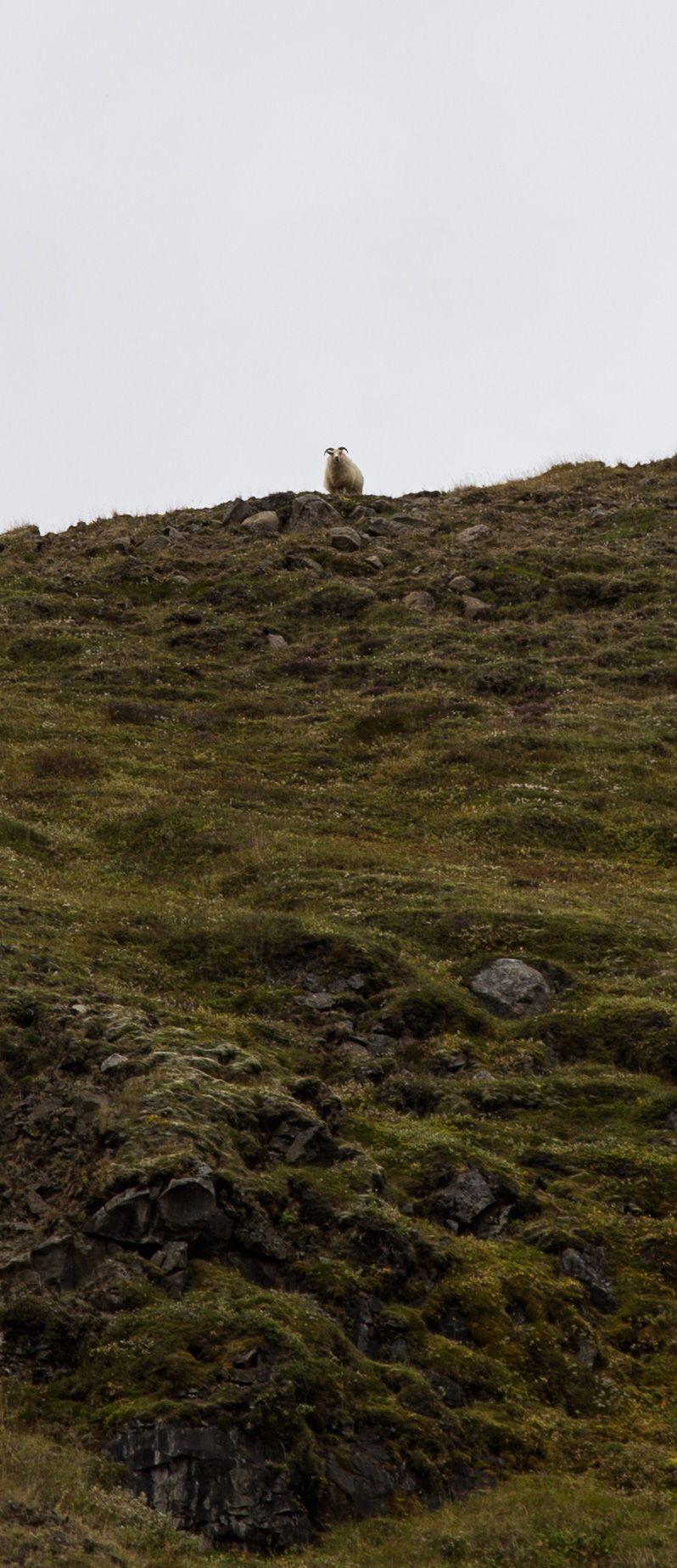 Reaparece la oveja que Gotham necesita