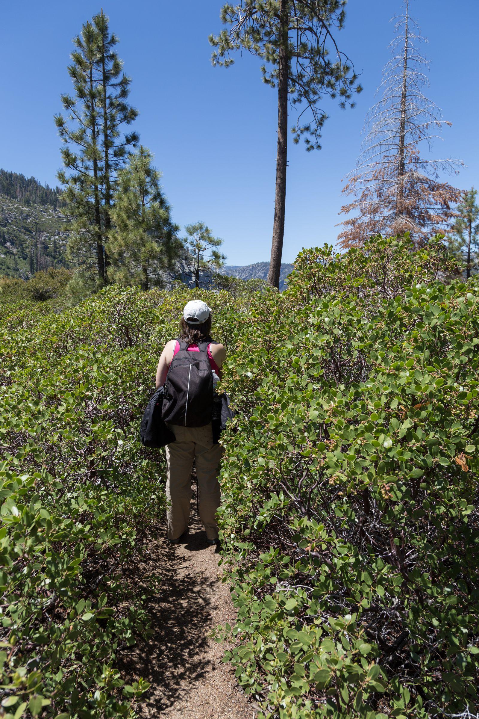Los arbustos que nos separan del precipicio