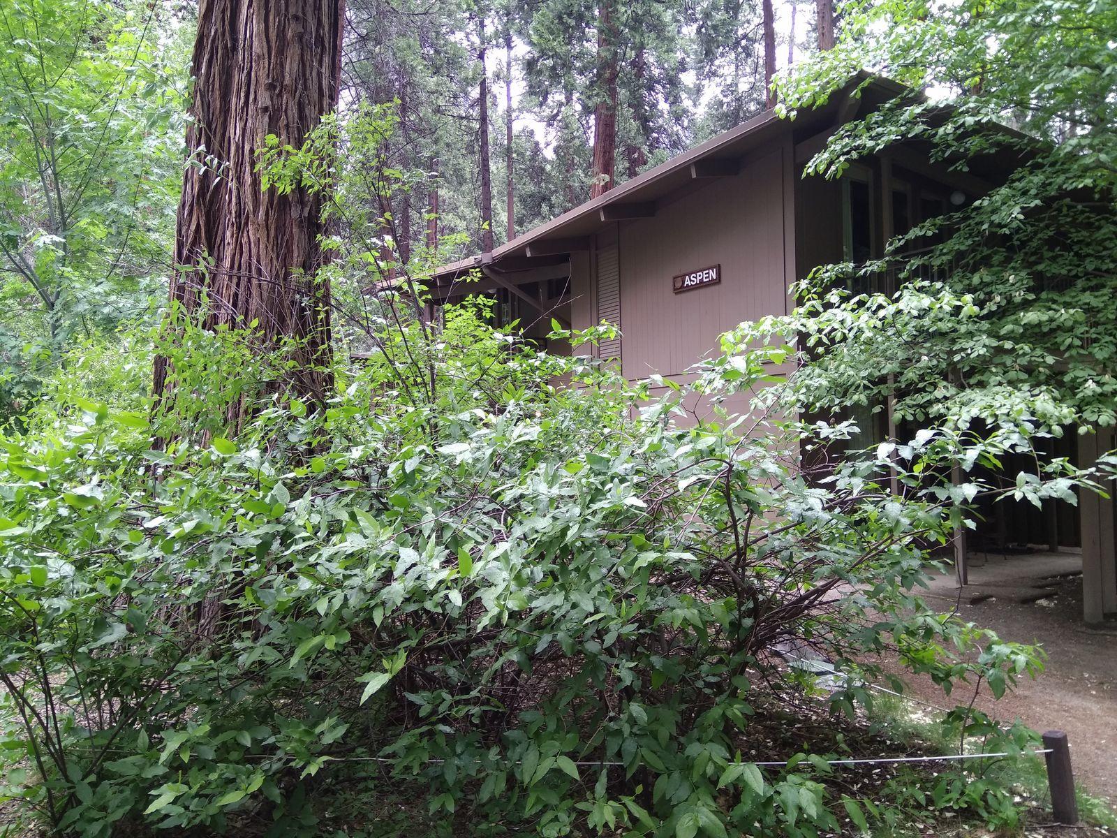 Volvemos a encontrarnos, Yosemite Lodge