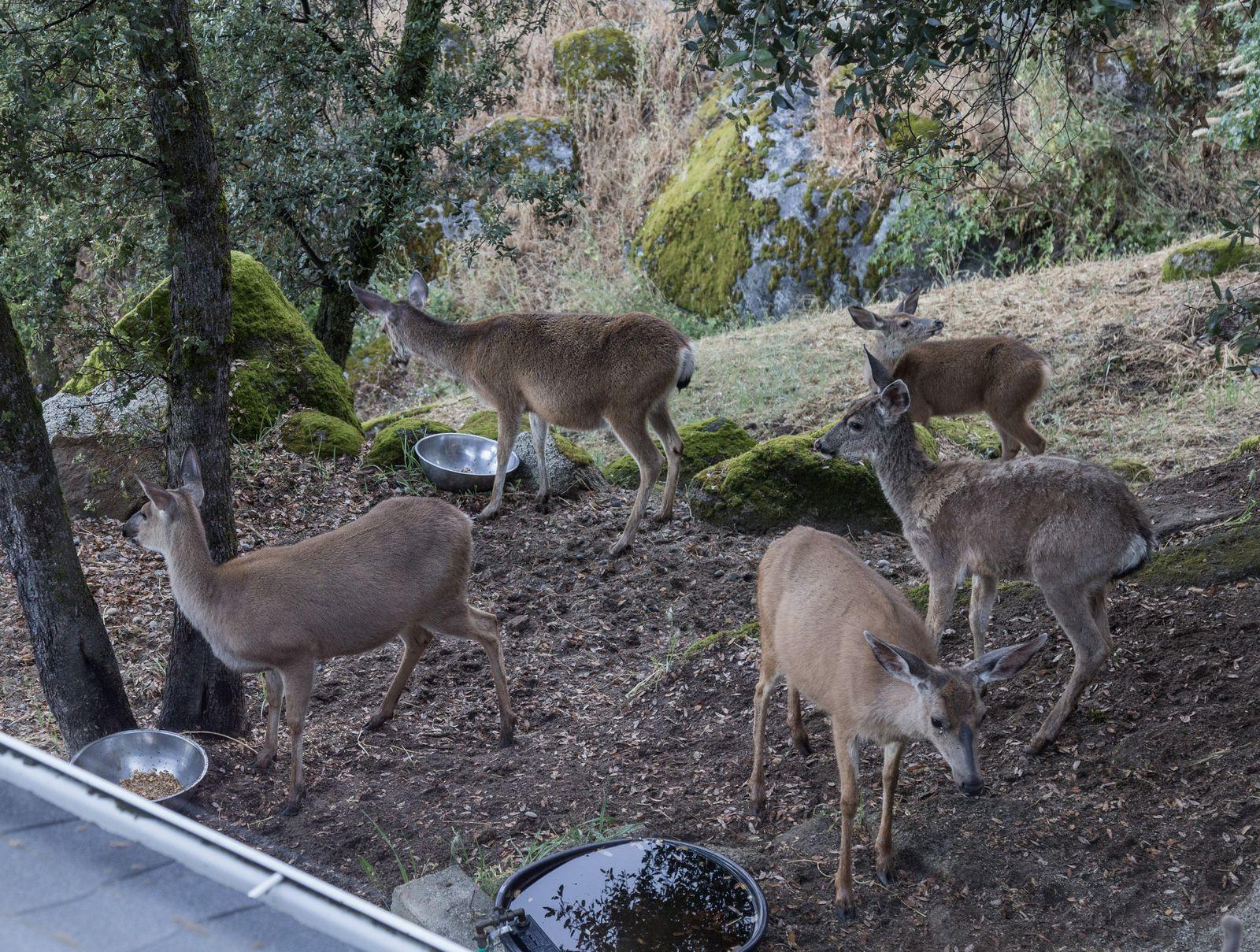 Nuestros vecinos, desayunando