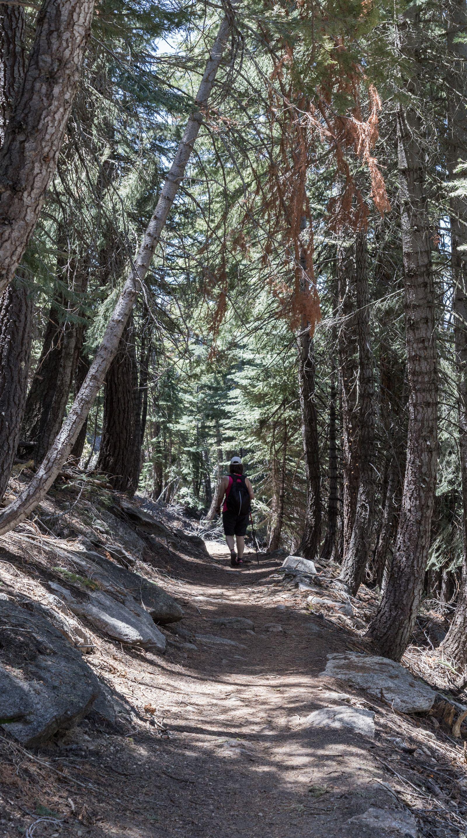 Paisajes del Pohono Trail