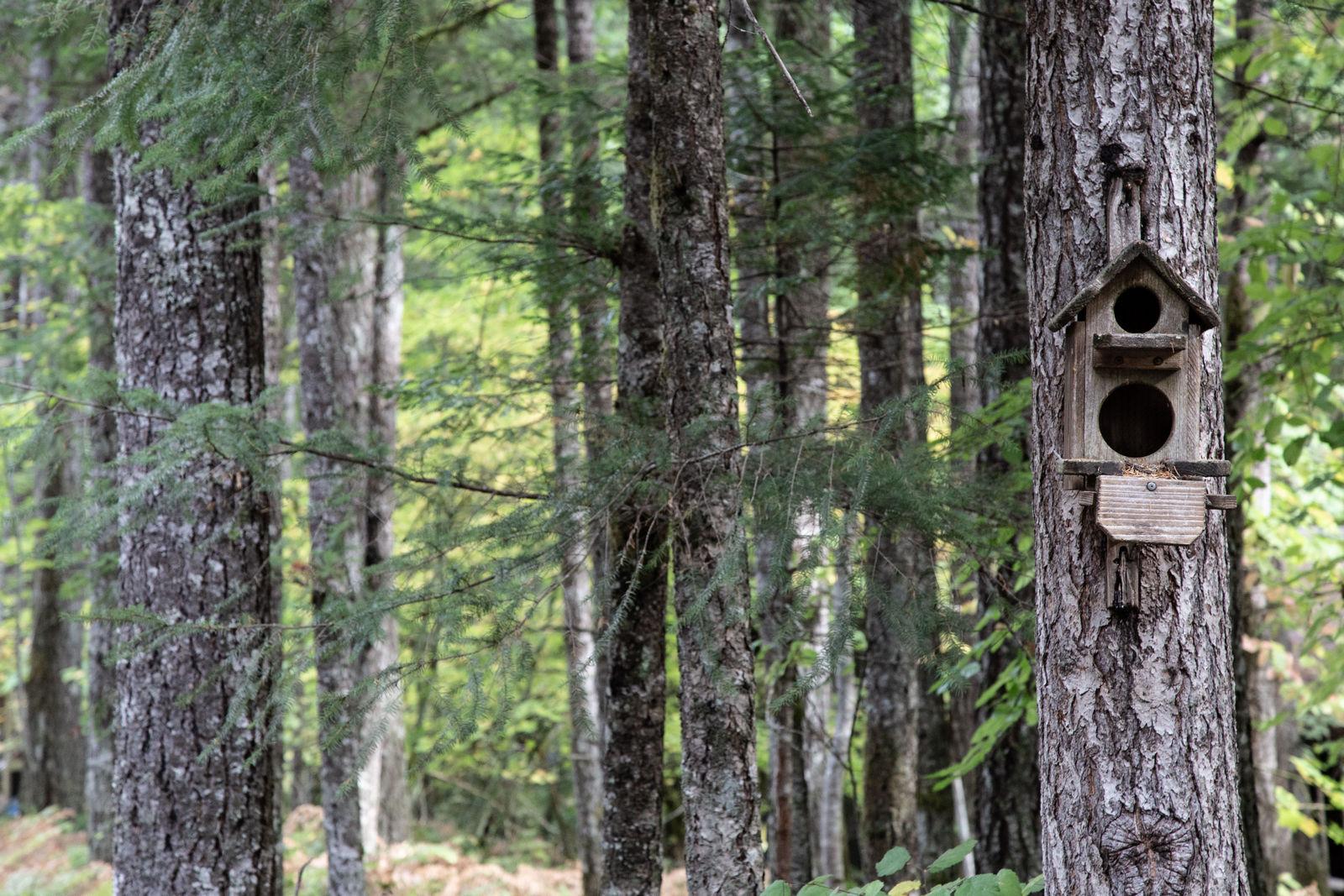 Dejamos atrás el bosque que nos ha acunado tres noches