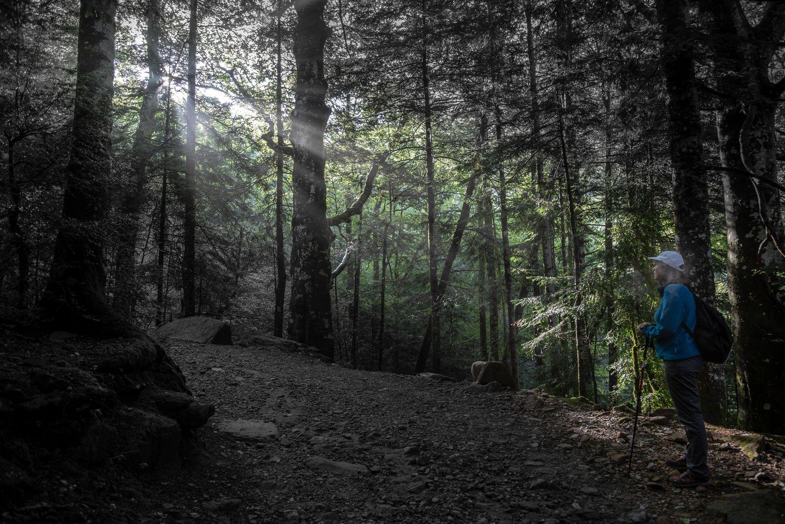 El sol y el bosque juegan con nosotros