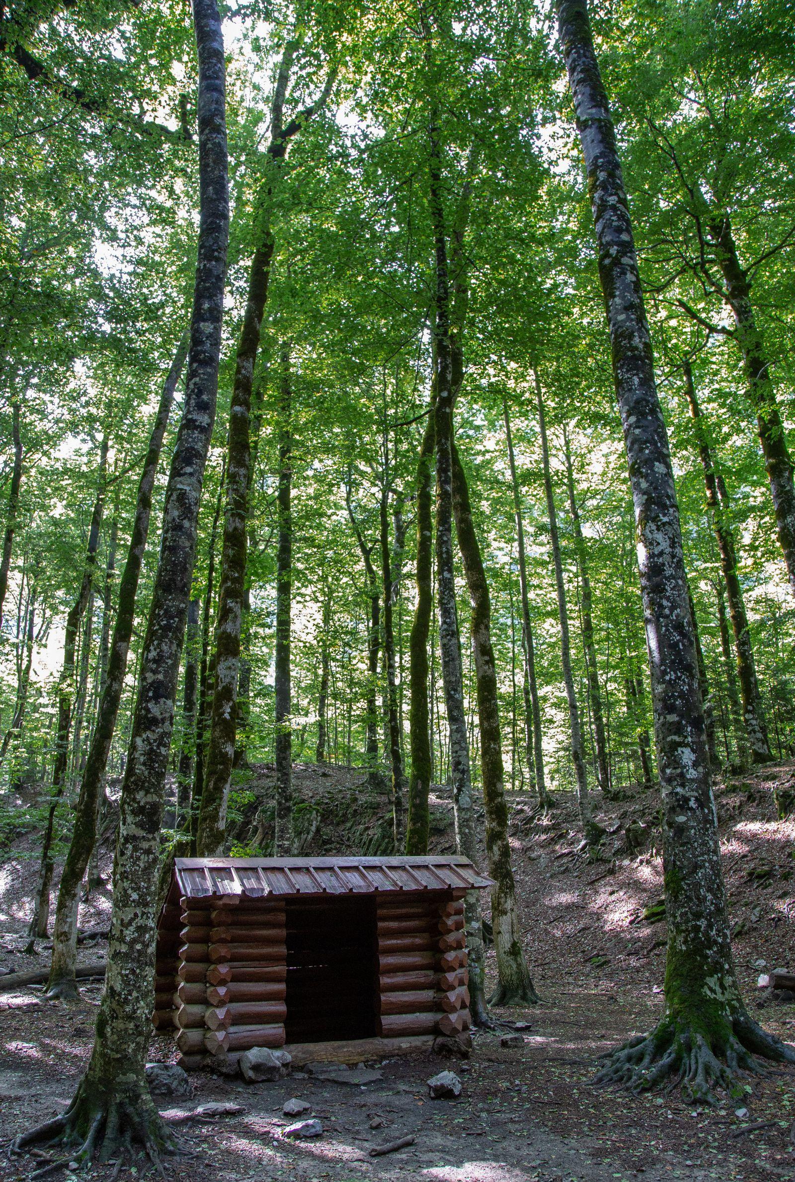Una solitaria cabaña en el bosque