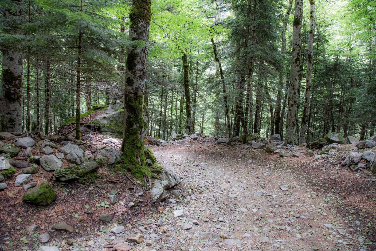 Descendiendo por el bosque