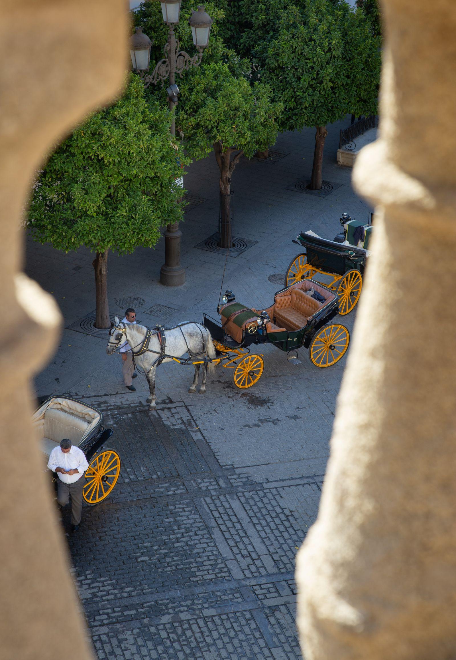 Espiando a los caballos