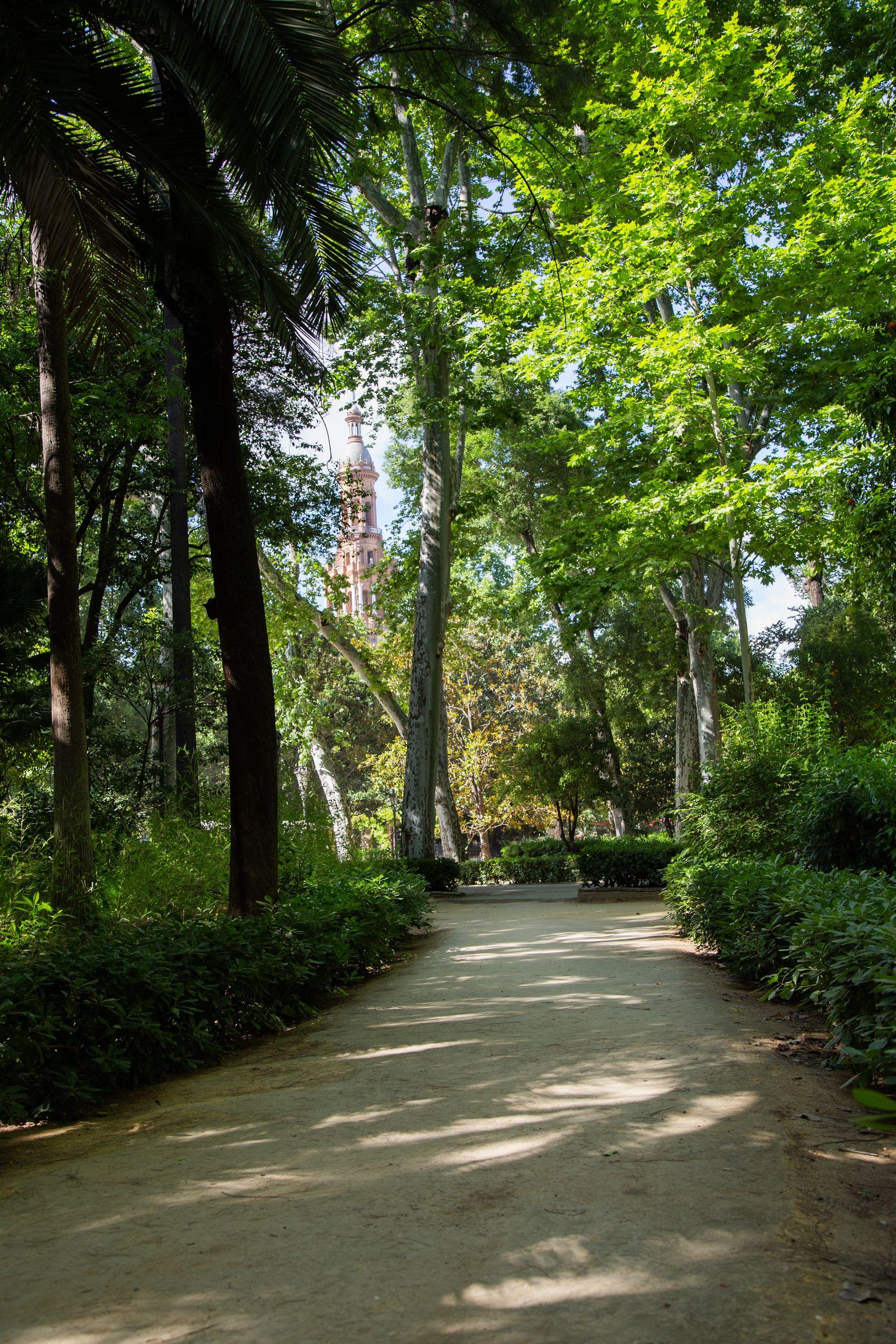 Los senderos del Parque de Maria Luisa